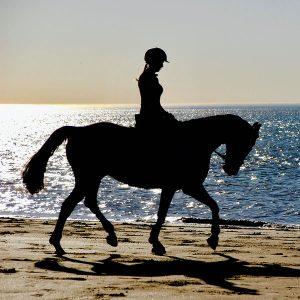 Accessori Cavalli