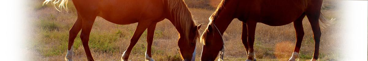 Abbigliamento per cavalli